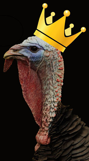 resized-king-turkey-for-web-site